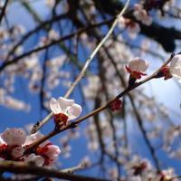 Virágvasárnapi képek