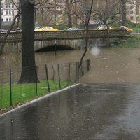 A nap képe - Úszik a Central Park