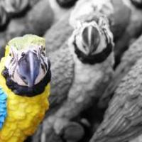 Papagájul közérthetően