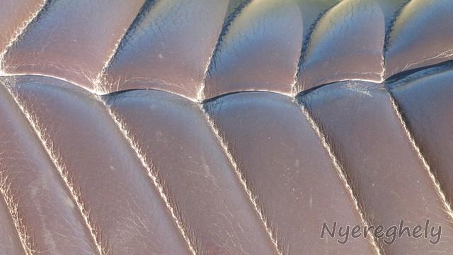 d7363c38a8 Nyeregbemutató: Spirig Ranger - Nyereghely
