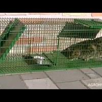 Macskacsapda