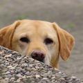 Kutyázni tanulni kutya nélkül?