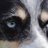 A kutyák gondolatolvasók?