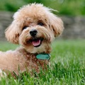 Mesélnél a kutyádról egy értekezleten?