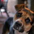 Tiszteled az embereid társas igényeit annyira, mint a kutyádét?