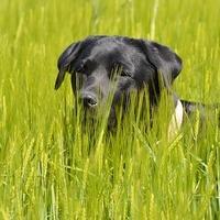 A kutyádnál bosszantó, neked pedig tanulságos. Mi az?