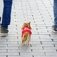 Ha a kutyázást sem magányosan csinálod, mással miért tennéd?