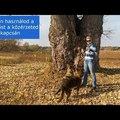 Hogyan használod a kutyázást a közérzeted kapcsán?