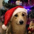 Milyen lenne, ha a kutyák is ajándékoznának karácsonykor?