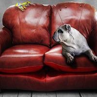 Felismered a kutya rekordereket?
