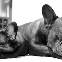 Kezeld a stresszt alvó kutyával!