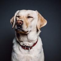 Miért mennél kutya nélkül kutyás szemináriumra?