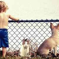Neveld úgy a gyerekedet, ahogy a kutyádat!