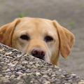 Miben hasonlít a kutyaiskola a céges tréningekhez?