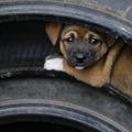 A kutyádnak nincs igaza attól, hogy érted. És az embereknek?