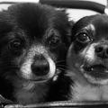 Mi az, amit a mentett kutyák kapcsán a jó életről tudsz?