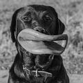 Nálad is kettős a mérce a kutyázásban?