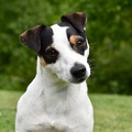 Tudatos jelenlét leckék kutyasétáltatóknak