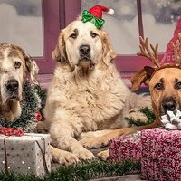 Hallgass a józan eszedre karácsonykor is!