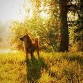 Kutyázás, ősz, időbeosztás – mi közük egymáshoz?