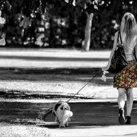 Mit ad nekünk a kutyasétáltatás?