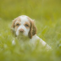 A kutyáddal megértőbb vagy, mint a kollégáiddal?