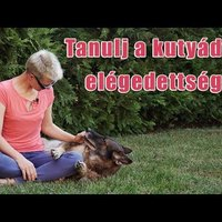 Tanulj a kutyádtól elégedettséget!