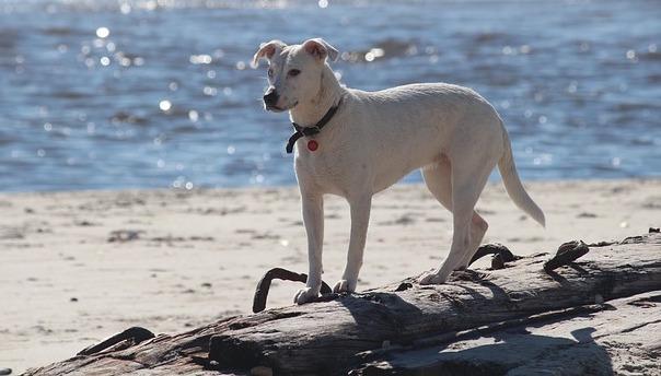 dog-498966_640.jpg
