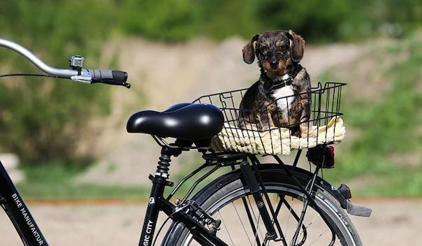 bike-2503831_640.jpg