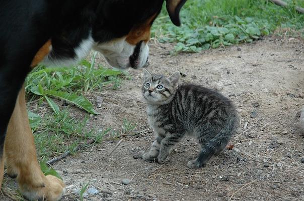 cat-245750_640.jpg
