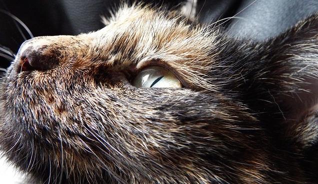 cat-852814_640.jpg