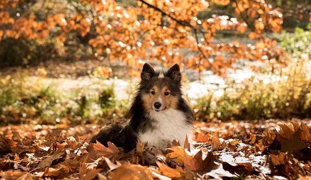 dog-1007594_640.jpg