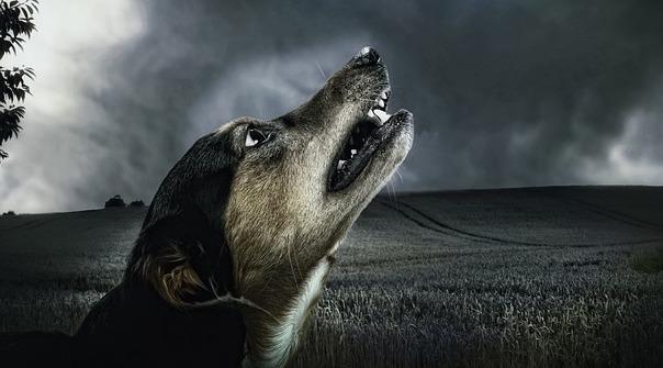 dog-183288_640.jpg