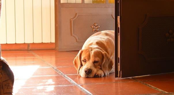 dog-190277_640_1.jpg