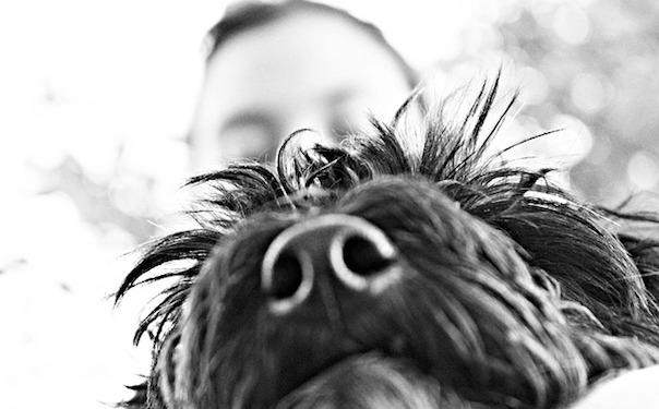 dog-196483_640.jpg