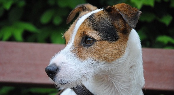 dog-2097102_640.jpg