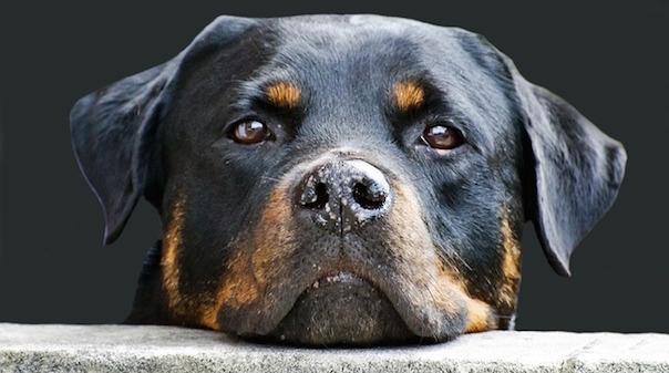 dog-214580_640.jpg
