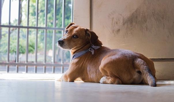 dog-2514782_640.jpg
