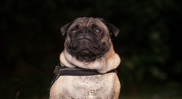 dog-2960139_640.jpg
