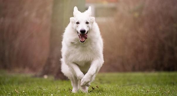 dog-3386004_640.jpg