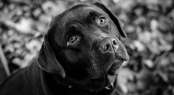 dog-3898445_640.jpg