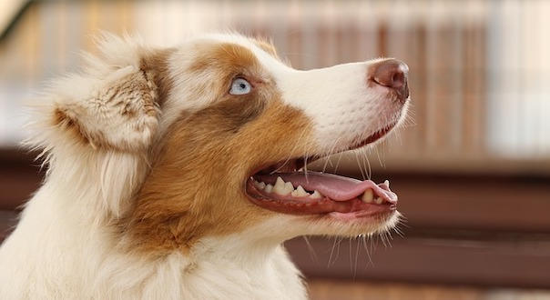 dog-4009328_640.jpg