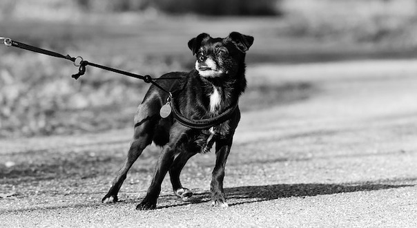 dog-4044102_640.jpg