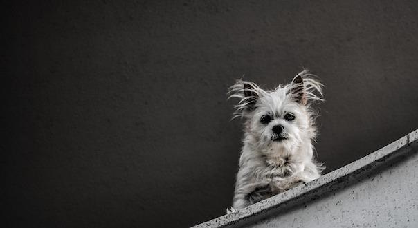 dog-4049130_640.jpg