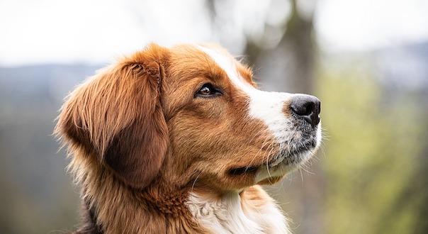 dog-4205794_640.jpg