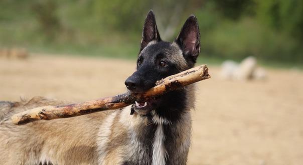 dog-4434423_640.jpg