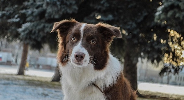 dog-4441580_640.jpg