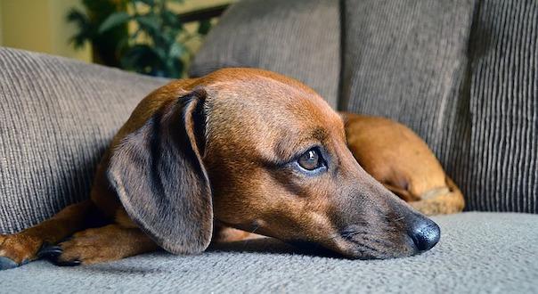 dog-4572301_640.jpg