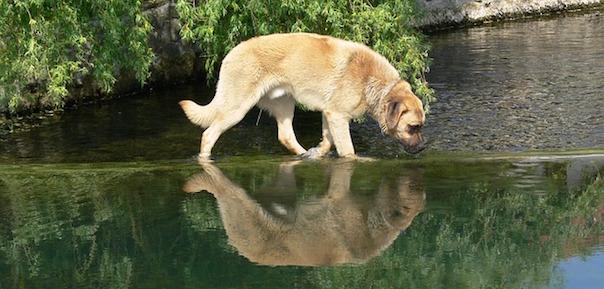 dog-484763_640.jpg