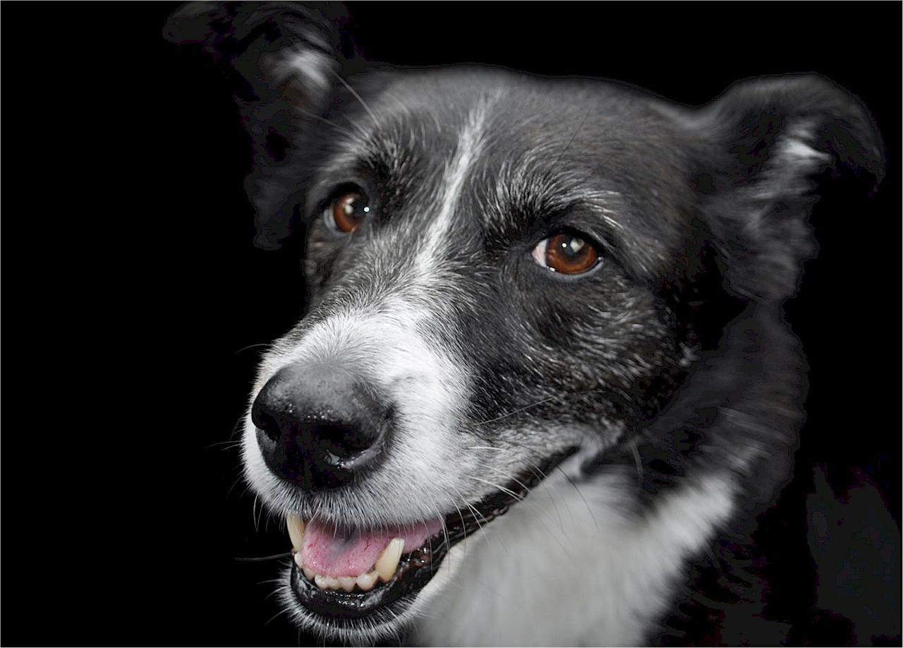 dog-531481_1280.jpg